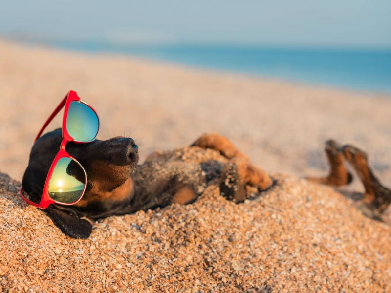 cane in spiaggia vacanza